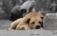 У Дрогобичі вирішити проблему безпритульних собак допоможуть активісти