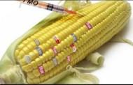 5 важливих фактів про користь ГМО