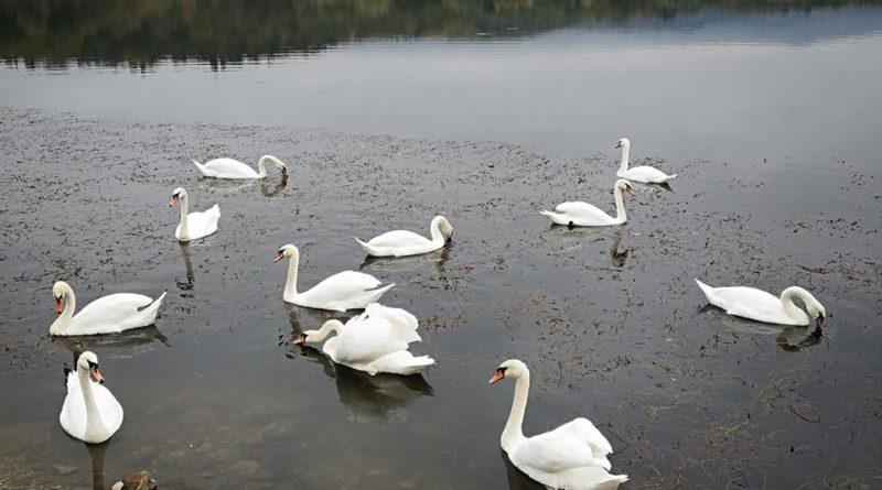 У Трускавецькому водоканалі спростували інформацію про брудну озерну воду